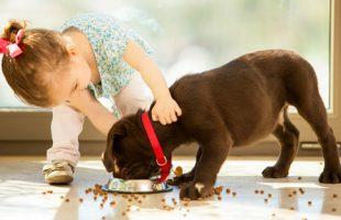 verus pet food